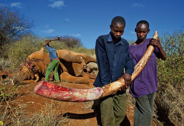"""Choáng với kiểu """"tính tiền"""" săn bắn động vật quý hiếm ở Châu Phi 3"""