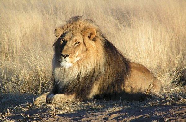 """Choáng với kiểu """"tính tiền"""" săn bắn động vật quý hiếm ở Châu Phi 5"""