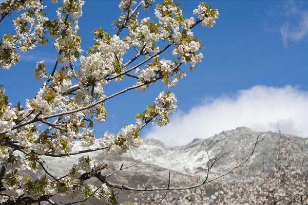 Ngắm các thiên đường hoa anh đào vòng quanh thế giới 18