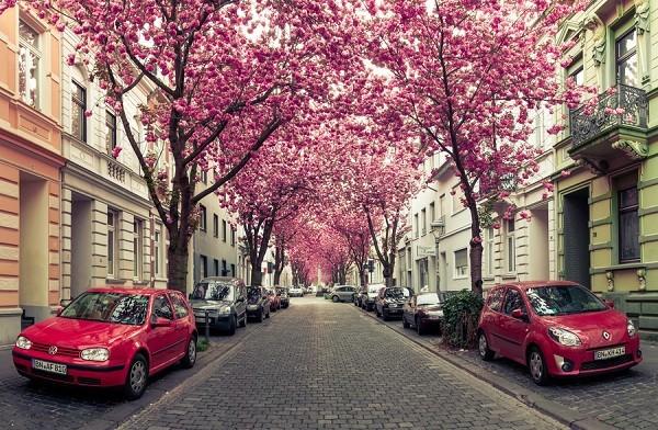 Ngắm các thiên đường hoa anh đào vòng quanh thế giới 9