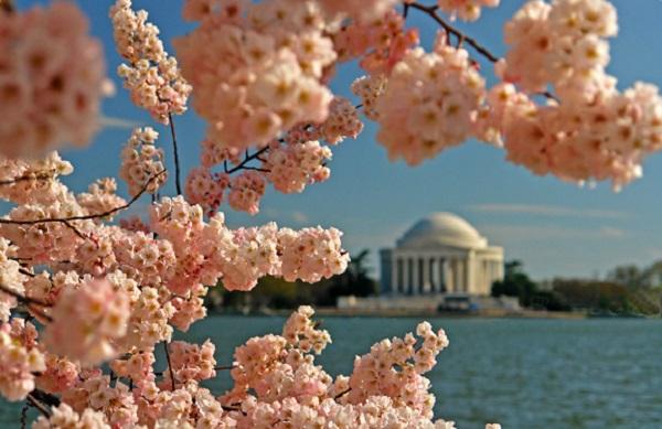 Ngắm các thiên đường hoa anh đào vòng quanh thế giới 14