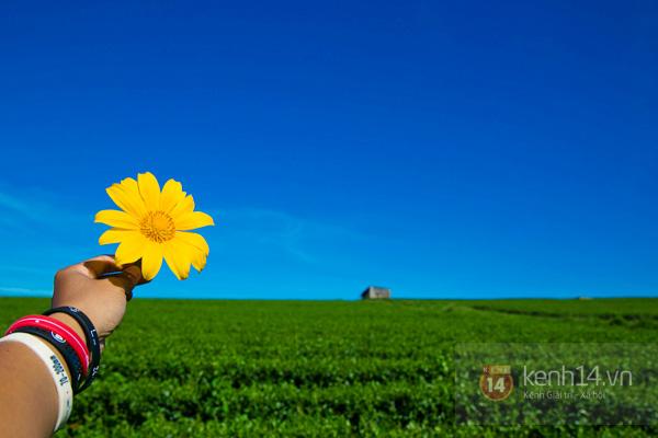Ngỡ ngàng vẻ đẹp rực rỡ của mùa hoa dã quỳ Đà Lạt 18