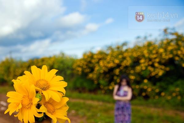 Ngỡ ngàng vẻ đẹp rực rỡ của mùa hoa dã quỳ Đà Lạt 13