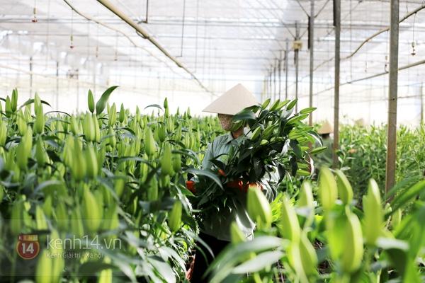 Nông trại hoa lớn nhất Việt Nam nhộn nhịp làm hoa Tết 2