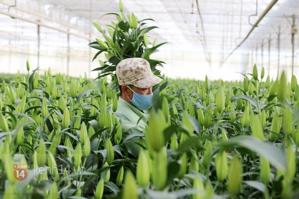 Nông trại hoa lớn nhất Việt Nam nhộn nhịp làm hoa Tết 3