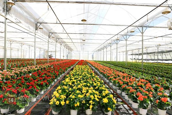 Nông trại hoa lớn nhất Việt Nam nhộn nhịp làm hoa Tết 11