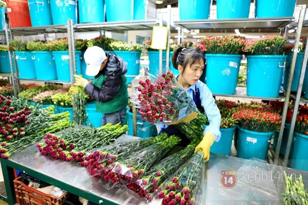 Nông trại hoa lớn nhất Việt Nam nhộn nhịp làm hoa Tết 19