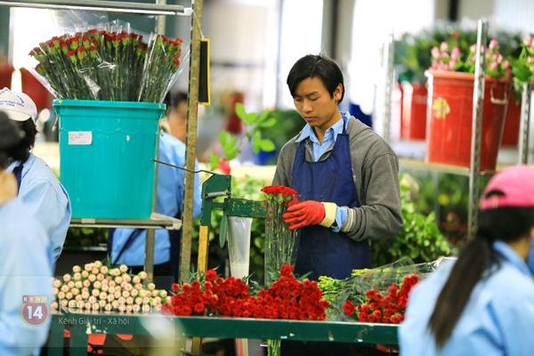 Nông trại hoa lớn nhất Việt Nam nhộn nhịp làm hoa Tết 23