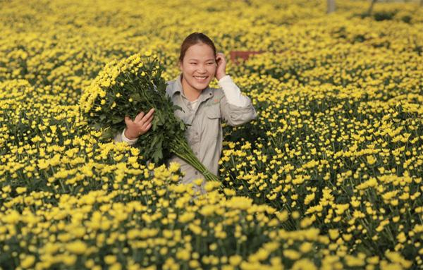 Nông trại hoa lớn nhất Việt Nam nhộn nhịp làm hoa Tết 7
