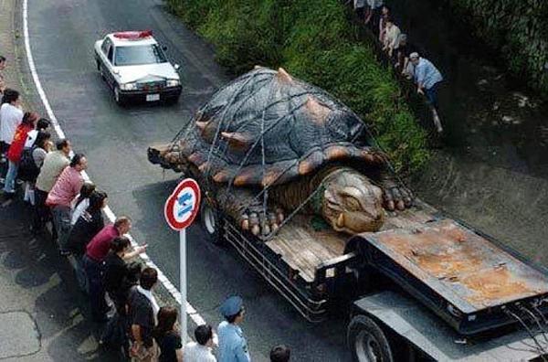 Vạch trần sự thật về rùa khổng lồ 529 tuổi, nặng 363 kg 1