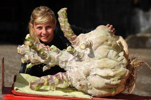"""""""Quái vật"""" củ cải khổng lồ nặng 43,6 kg 1"""