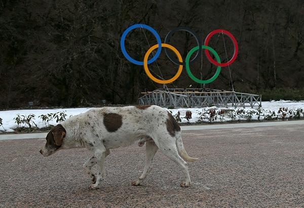 Olympic Mùa đông 2014: Hàng ngàn chú chó hoang dạo chơi tại Sochi 1