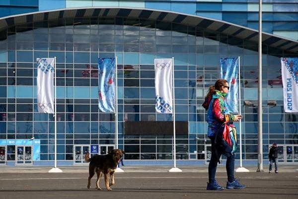 Olympic Mùa đông 2014: Hàng ngàn chú chó hoang dạo chơi tại Sochi 5