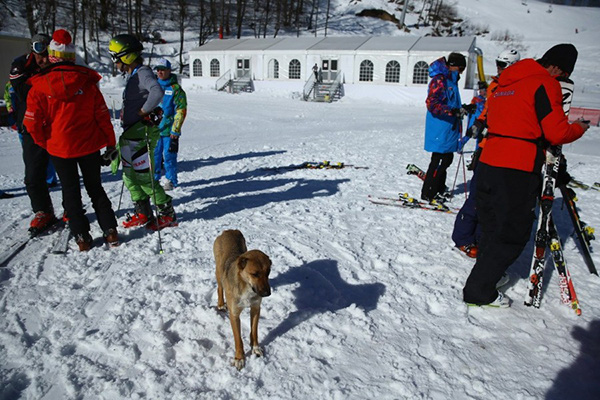 Olympic Mùa đông 2014: Hàng ngàn chú chó hoang dạo chơi tại Sochi 6