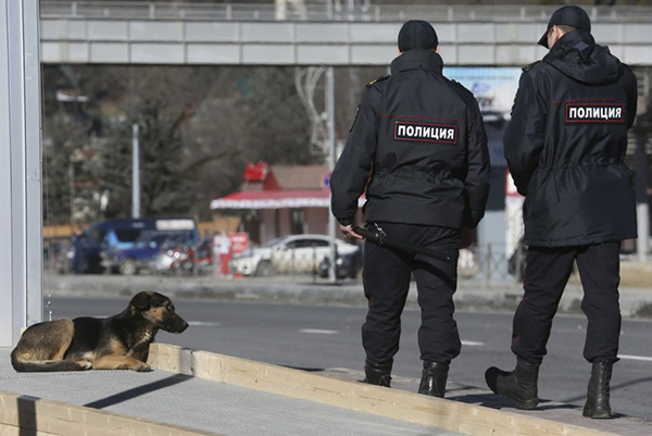 Olympic Mùa đông 2014: Hàng ngàn chú chó hoang dạo chơi tại Sochi 7