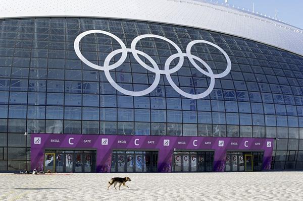 Olympic Mùa đông 2014: Hàng ngàn chú chó hoang dạo chơi tại Sochi 8