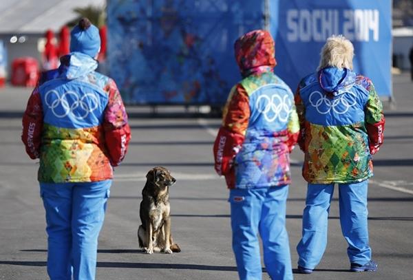 Olympic Mùa đông 2014: Hàng ngàn chú chó hoang dạo chơi tại Sochi 10
