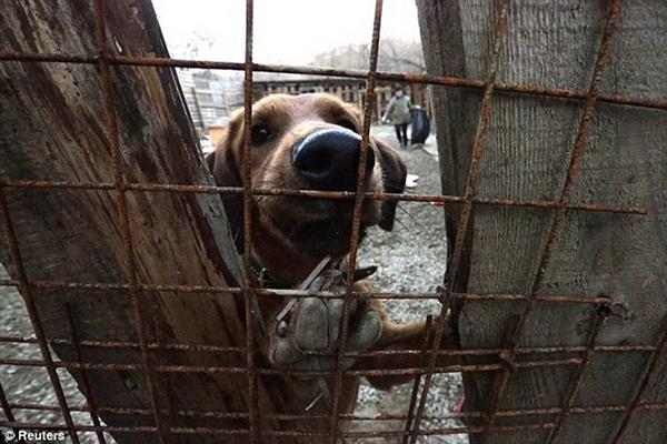 Olympic Mùa đông 2014: Hàng ngàn chú chó hoang dạo chơi tại Sochi 14