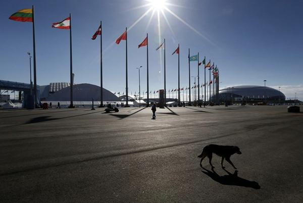 Olympic Mùa đông 2014: Hàng ngàn chú chó hoang dạo chơi tại Sochi 17