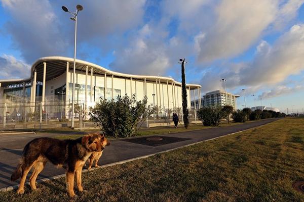 Olympic Mùa đông 2014: Hàng ngàn chú chó hoang dạo chơi tại Sochi 19