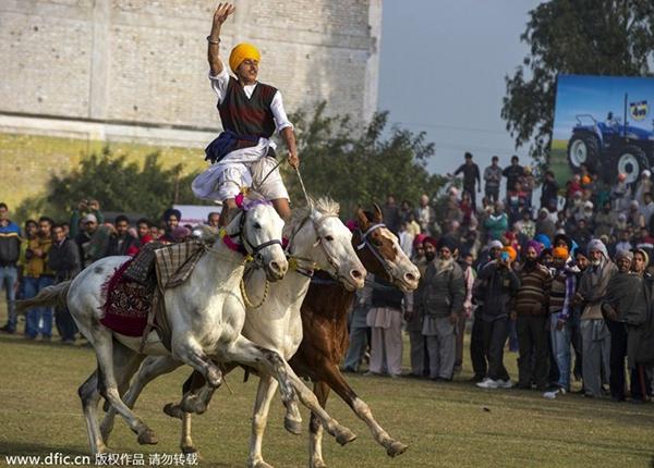 """Lái xe bằng thang, đua bò... và các môn thể thao cực """"dị"""" tại Ấn Độ 17"""