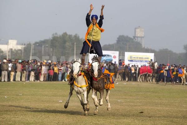 """Lái xe bằng thang, đua bò... và các môn thể thao cực """"dị"""" tại Ấn Độ 19"""