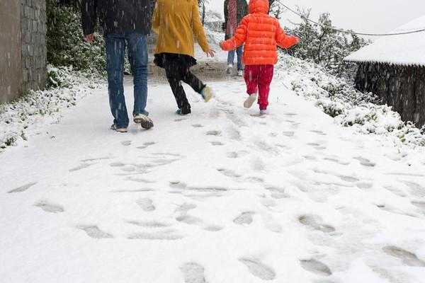 Chùm ảnh hot: Tuyết rơi dày, phủ trắng Sa Pa 5