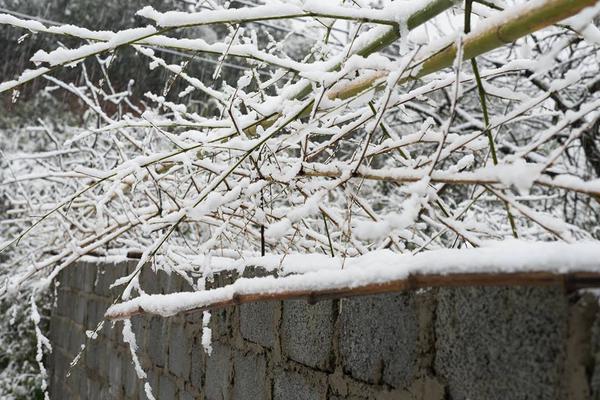 Chùm ảnh hot: Tuyết rơi dày, phủ trắng Sa Pa 6