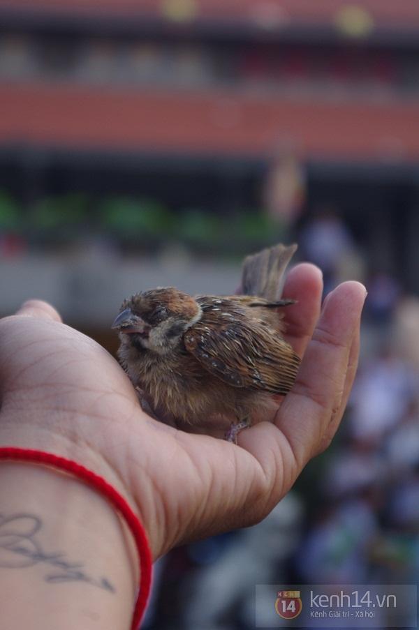Xót xa cái chết của những con chim phóng sinh trong mùa Vu Lan 5