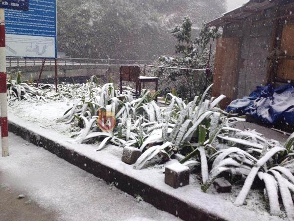 Chùm ảnh hot: Tuyết rơi dày, phủ trắng Sa Pa 1