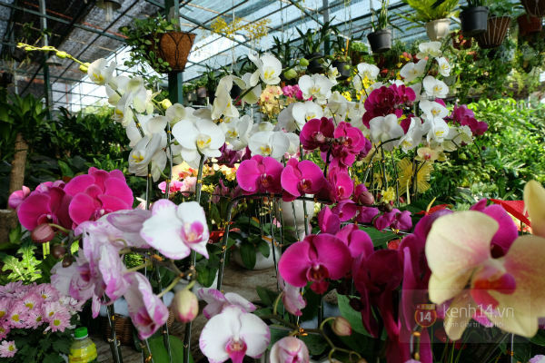 """Nhiều loại hoa có tên """"siêu lạ"""" xuống phố Sài Gòn vào dịp Tết Ất Mùi 5"""