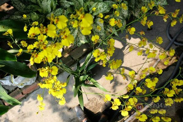 """Nhiều loại hoa có tên """"siêu lạ"""" xuống phố Sài Gòn vào dịp Tết Ất Mùi 2"""