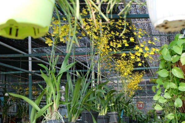 """Nhiều loại hoa có tên """"siêu lạ"""" xuống phố Sài Gòn vào dịp Tết Ất Mùi 1"""