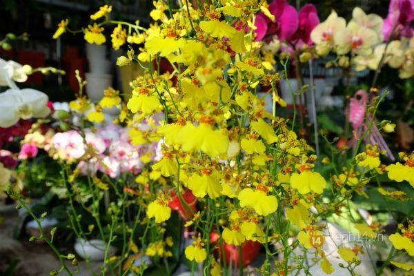 """Nhiều loại hoa có tên """"siêu lạ"""" xuống phố Sài Gòn vào dịp Tết Ất Mùi 3"""