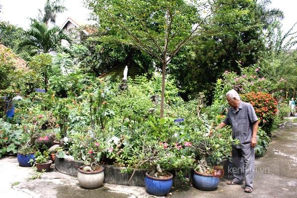 Độc đáo biệt thự Vườn Kiều độc nhất Việt Nam của cụ ông 81 tuổi 2