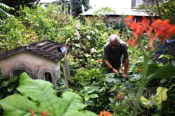 Độc đáo biệt thự Vườn Kiều độc nhất Việt Nam của cụ ông 81 tuổi 8