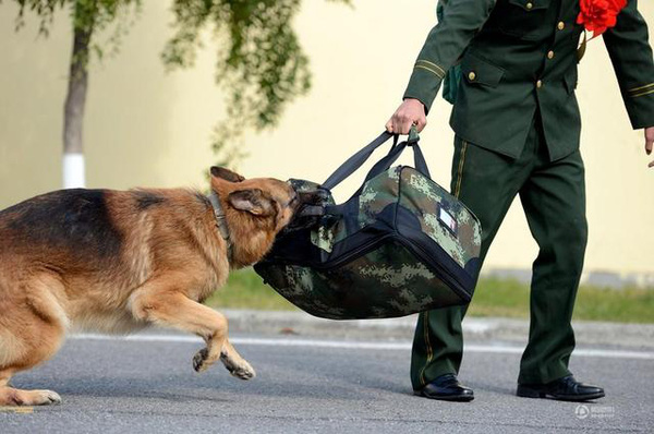 Chú chó trung thành bịn rịn níu kéo người huấn luyện lúc chia tay 1