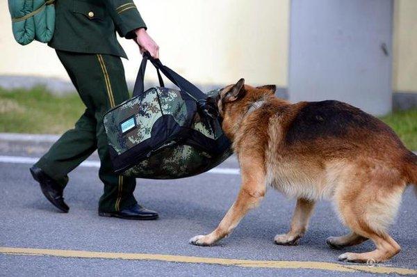 Chú chó trung thành bịn rịn níu kéo người huấn luyện lúc chia tay 2