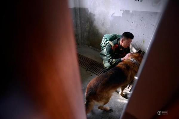 Chú chó trung thành bịn rịn níu kéo người huấn luyện lúc chia tay 4