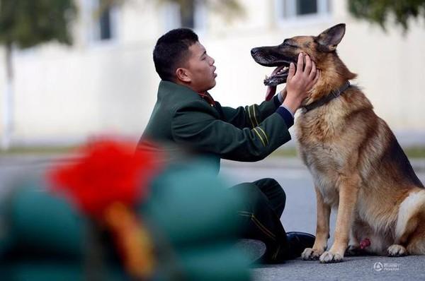 Chú chó trung thành bịn rịn níu kéo người huấn luyện lúc chia tay 5