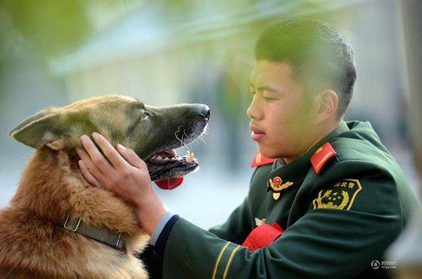 Chú chó trung thành bịn rịn níu kéo người huấn luyện lúc chia tay 6