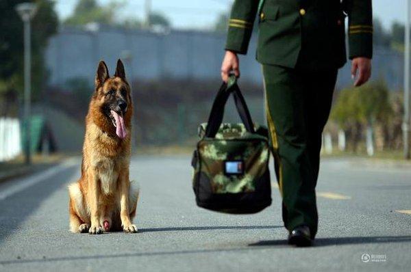 Chú chó trung thành bịn rịn níu kéo người huấn luyện lúc chia tay 7