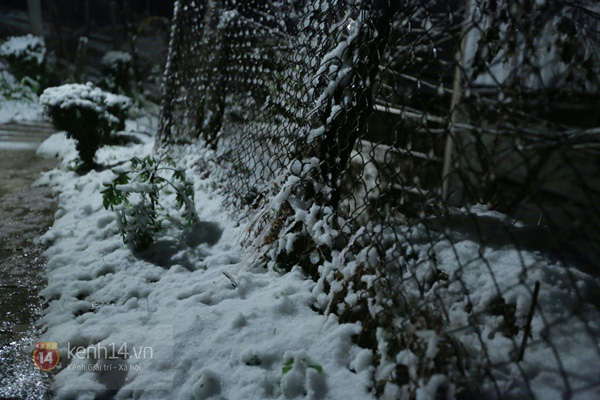 Chùm ảnh: Du khách thích thú chụp ảnh cùng tuyết trắng ở Sa Pa 3