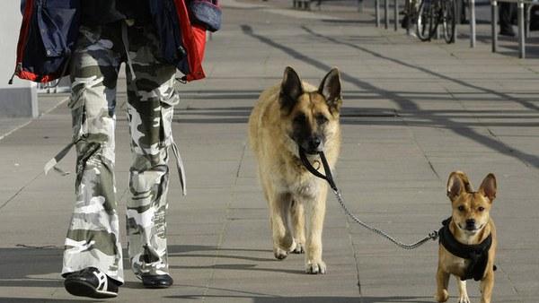 15 chú chó làm việc chăm chỉ chẳng kém gì con người - Ảnh 9.