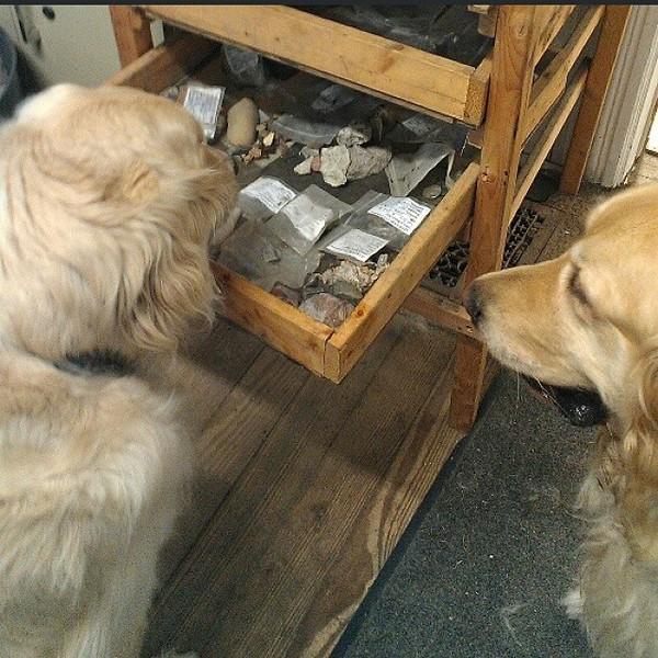 15 chú chó làm việc chăm chỉ chẳng kém gì con người - Ảnh 11.