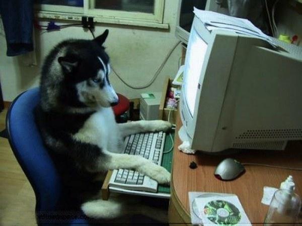 15 chú chó làm việc chăm chỉ chẳng kém gì con người - Ảnh 13.