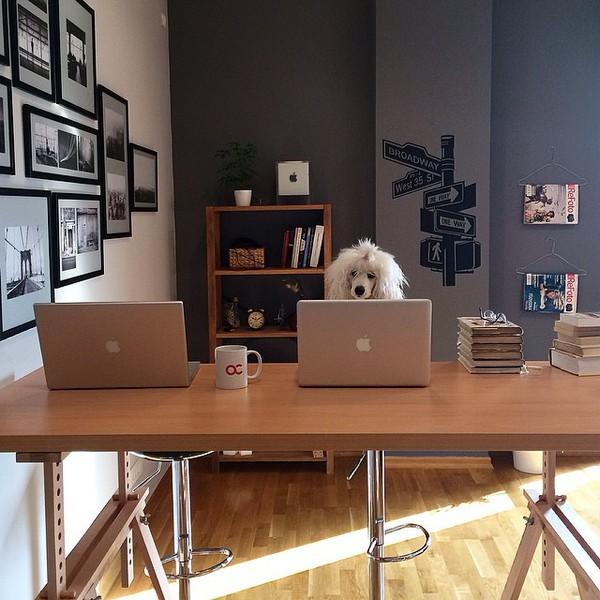15 chú chó làm việc chăm chỉ chẳng kém gì con người - Ảnh 15.