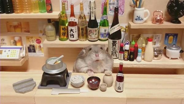 Tham quan quán bar siêu ngộ nghĩnh của những chú chuột Hamster đáng yêu 13