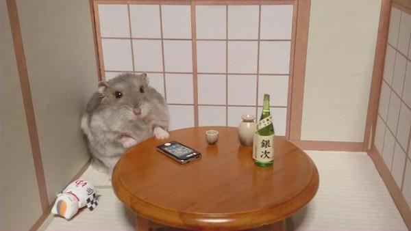 Tham quan quán bar siêu ngộ nghĩnh của những chú chuột Hamster đáng yêu 5