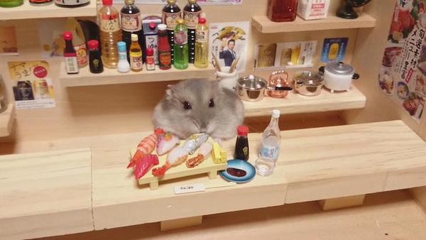 Tham quan quán bar siêu ngộ nghĩnh của những chú chuột Hamster đáng yêu 6